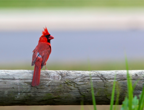 What's your cardinal?